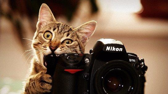 Фотография – единственный способ запомнить момент по-настоящему