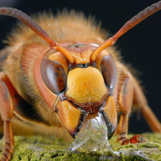 В киевских многоэтажках поселились опасные пчелы