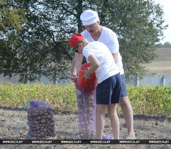 Лукашенко с сыном собрал урожай картофеля: опубликованы фото и видео