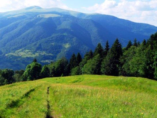 В Минприроде будут спасать Карпатские леса