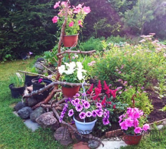 Цветники на даче для начинающих пошагово
