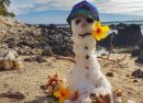 На Гавайях выпало рекордное количество снега (ФОТО)