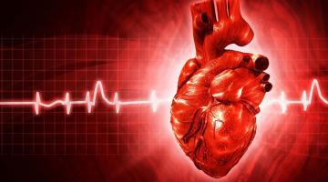 Ученые выяснили, почему бьется сердце