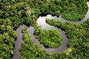 Биологи обнаружили шестьсот новых видов растений в бразильской Амазонии