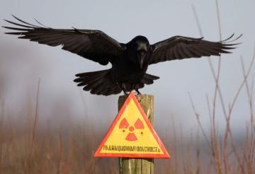 Столичные власти предложили сделать из Чернобыля огромную свалку