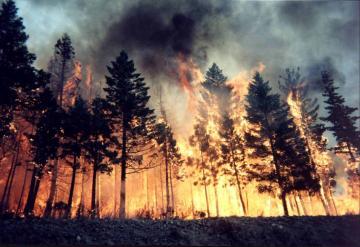 Более 60 человек стали жертвами лесных пожаров в Португалии