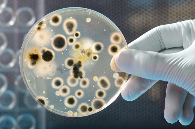 Ученые обнаружили неизвестные науке неуязвимые микроорганизмы