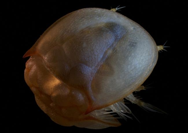 Трехмерную модель древнейшего существа Земли создали в Швеции