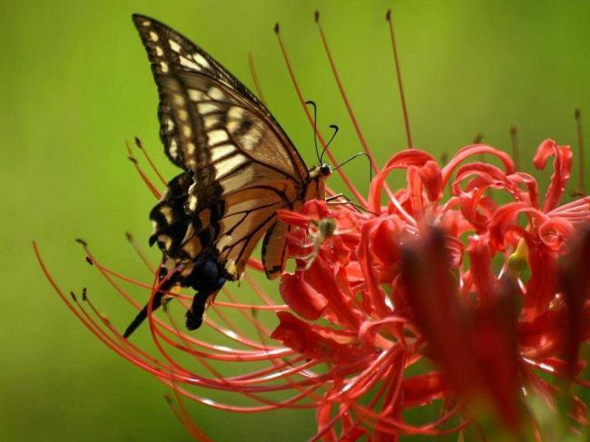 Ученые заявили о массовой пропаже насекомых в Германии