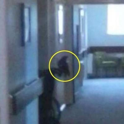 В Великобритании женщина сфотографировала смерть (ФОТО)