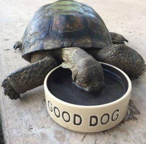 Курьезные снимки животных, которые подарят вам хорошее настроение (ФОТО)